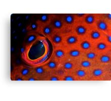 Coral Trout Eye Canvas Print