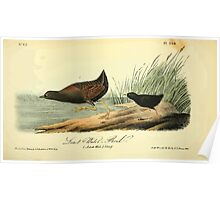 James Audubon Vector Rebuild - The Birds of America - From Drawings Made in the United States and Their Territories V 1-7 1840 - Least Water Rail Poster