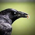 Hungry Crow by Tony Steinberg