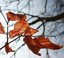 Autumn Leaves by Matt  Williams