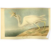 James Audubon Vector Rebuild - The Birds of America - From Drawings Made in the United States and Their Territories V 1-7 1840 - Great White Heron Poster