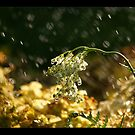 watering a plant of life by narabia