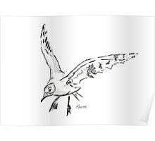 Seagull - Drawing Day 5th June 2010 Poster