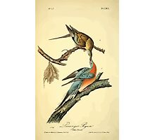 James Audubon Vector Rebuild - The Birds of America - From Drawings Made in the United States and Their Territories V 1-7 1840 - Passenger Pigeon Photographic Print