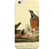 James Audubon Vector Rebuild - The Birds of America - From Drawings Made in the United States and Their Territories V 1-7 1840 - Blue-headed Ground Dove  iPhone Case/Skin