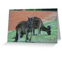 Australian Western Grey Kangaroos Greeting Card
