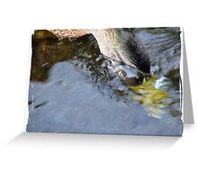 Diving Duck III Greeting Card