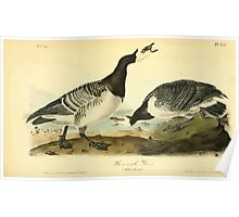 James Audubon Vector Rebuild - The Birds of America - From Drawings Made in the United States and Their Territories V 1-7 1840 - Barnacle Goose Poster