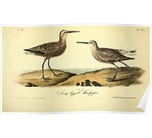 James Audubon Vector Rebuild - The Birds of America - From Drawings Made in the United States and Their Territories V 1-7 1840 - Long Legged Sandpiper Poster