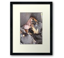 Breast Is Best Framed Print