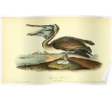 James Audubon Vector Rebuild - The Birds of America - From Drawings Made in the United States and Their Territories V 1-7 1840 - Brown Pelican Youth Poster