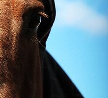 24.4.2015: Horse with Hood by Petri Volanen
