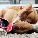 24.4.2015: Tired Horses by Petri Volanen