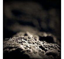 Mono-Moss Photographic Print