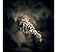 Mono-Fern Photographic Print