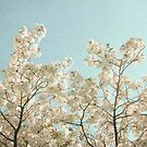 Spring Flowers by Cassia