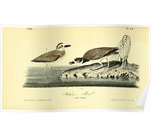 James Audubon Vector Rebuild - The Birds of America - From Drawings Made in the United States and Their Territories V 1-7 1840 - Wilson's Plover Poster
