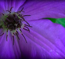 Purple Passion by Catherine Mardix