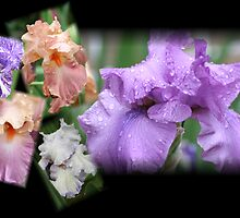 Iris Collage by Lori Walton