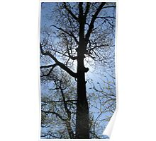 Spring time in the trees Poster