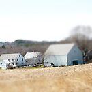 Tiny Farm by Judi FitzPatrick