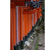 Fushimi Inari Shrine Photographic Print