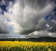 The Malvern Hills by Douglas  Latham