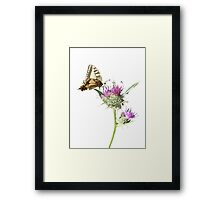 Scarce Swallowtail Butterfly and Thistle Background Removed Framed Print