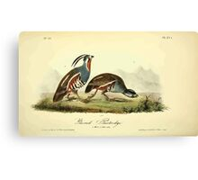 James Audubon Vector Rebuild - The Birds of America - From Drawings Made in the United States and Their Territories V 1-7 1840 - Ground Partridge Canvas Print