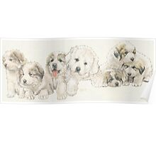 Great Pyrenees Puppies Poster