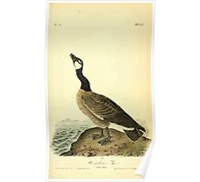 James Audubon Vector Rebuild - The Birds of America - From Drawings Made in the United States and Their Territories V 1-7 1840 - Hutchins' Goose Poster