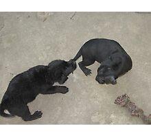 Puppy Tail Tug-O-War Photographic Print