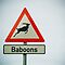 Watch out for baboons that look like antelope by Tim Cowley