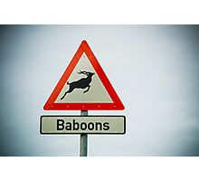 Watch out for baboons that look like antelope Photographic Print