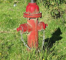 Red Hydrant and Flowers by rhamm