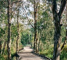 Wetlands Boardwalk by Zac Harney