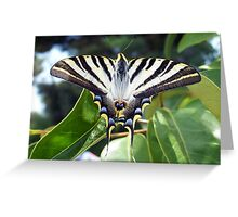 Swallowtail Butterfly Resting on Oleander Leaves Greeting Card