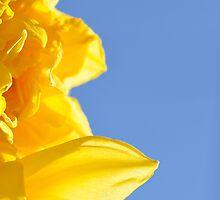 Yellow by Grant  Muirhead