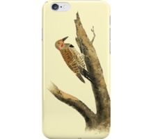 James Audubon Vector Rebuild - The Birds of America - From Drawings Made in the United States and Their Territories V 1-7 1840 - Missouri Red Moustached Woodpecker iPhone Case/Skin