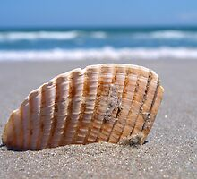 She Sells- Sea Shells... by tigerwings