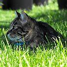 Jasper Enjoying the Green Grass by Jan  Tribe