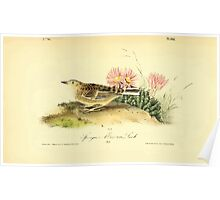 James Audubon Vector Rebuild - The Birds of America - From Drawings Made in the United States and Their Territories V 1-7 1840 - Sprague's Missouri Lark Poster
