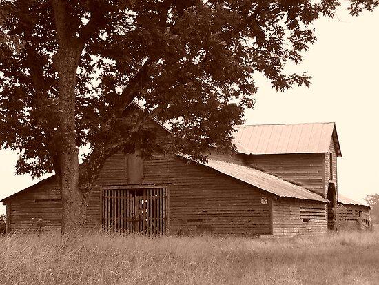 Old Mule Barn by WTBird