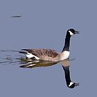 Canada Goose Reflection by WTBird