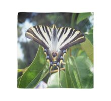 Swallowtail Butterfly Resting on Oleander Leaves Scarf