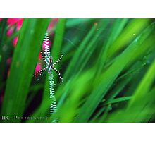 Charlotte web Photographic Print