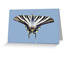 Swallowtail Resting on Oleander Leaves  Background Removed Greeting Card