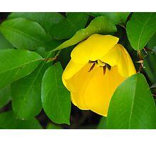 Yellow Beauty Photographic Print