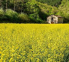 Rapeseed and Barn by TonyPriestley