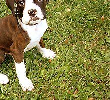 Otis Puppy by ys-eye